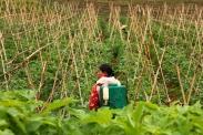 Landleben im Shan-Staat von Myanmar