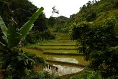 Reisterrasse im Nam Ha Nationalpark