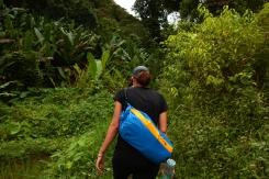 Wandern durch den Dschungel