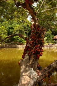 Das Grab des Minh Mang in der Nähe von Hue