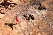 Auf den Spuren der Dinosaurier