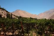 Pisco-Verkostung im Elqui-Tal