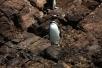 Die Pinguinkolonien von Puñihuil
